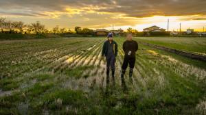 natural-rice-farm-japan