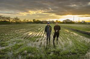 Fuminori Yamamoto and his son, Daisuke, at their natural no-till rice field in Inashiki, Japan (Photo: P.M. Lydon | Final Straw)