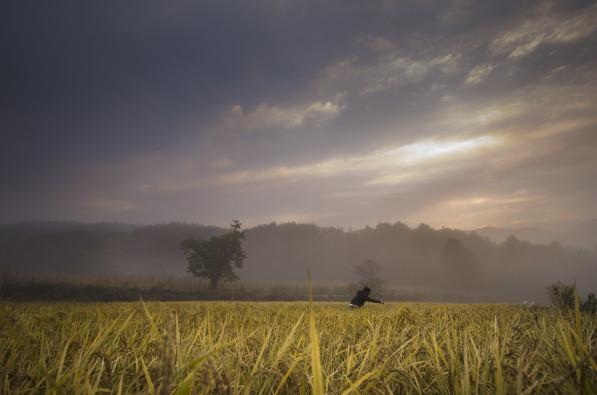 Rice harvest at 최성현 Seonghyun Choi's natural farm in Hongcheon, South Korea (Photo: P.M. Lydon | Final Straw)