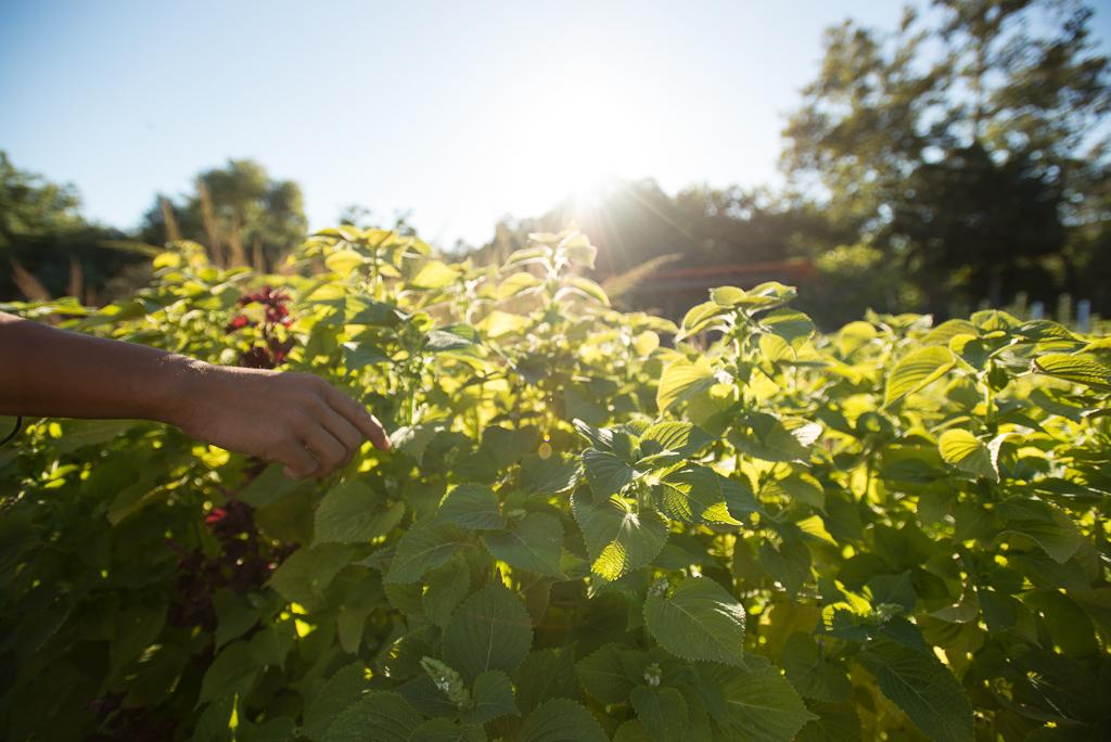 The herb field at Namu Farm