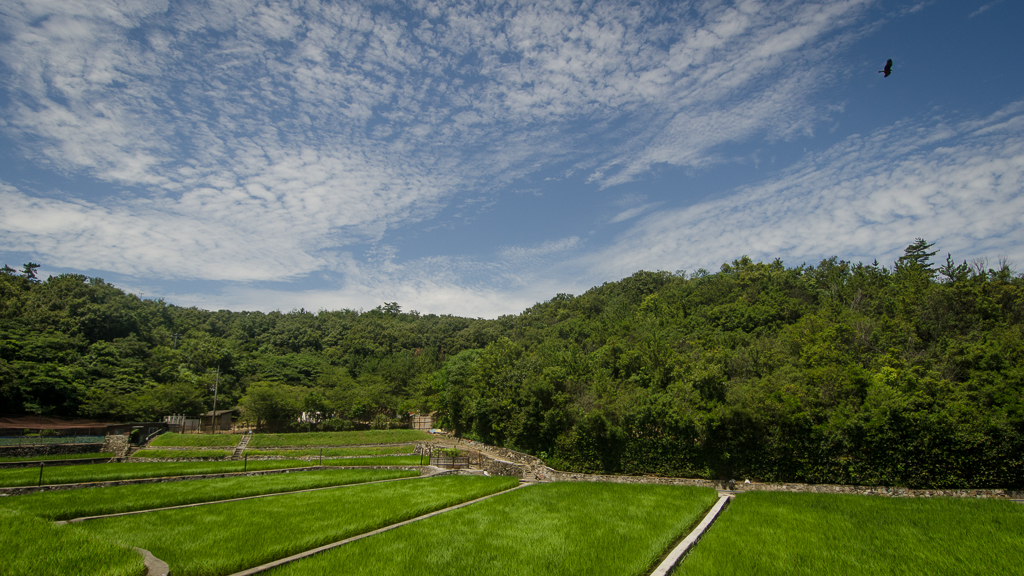 The rice farm of Masakatsu Nakamura. The only one left on the island (2013, P.M. Lydon / FinalStraw.org | CC BY-SA)