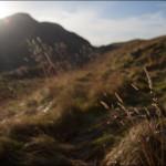Edinburgh Nature Mornings at Holyrood Park (photo: FinalStraw.org | CC BY-SA)