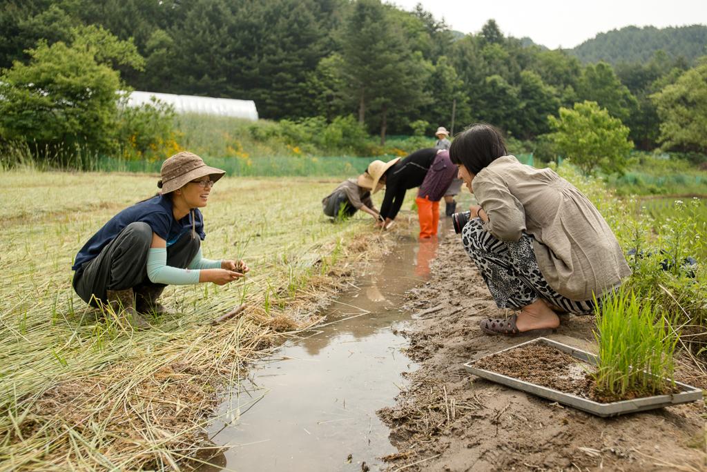 hongcheon-farm-plant_PML6961