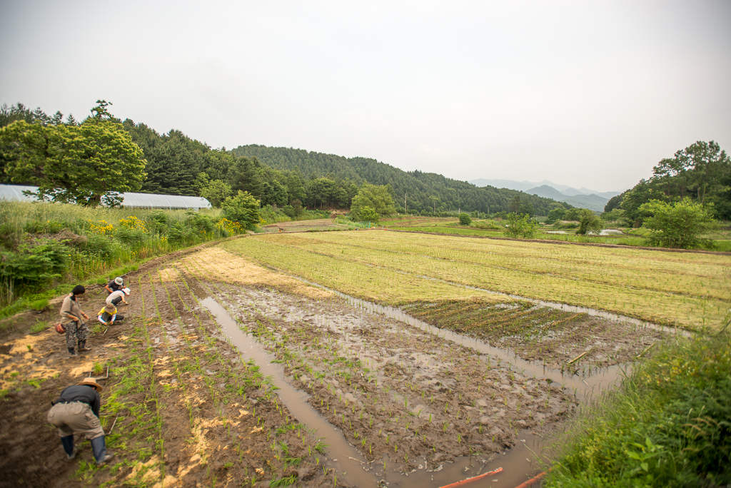 hongcheon-farm-plant_PML7030