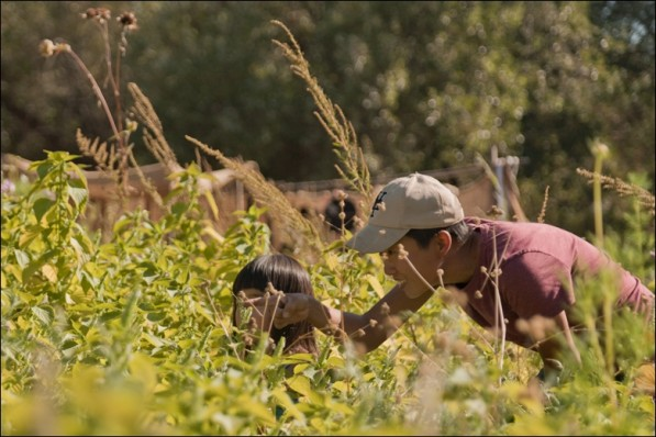 Harvest at Namu Natural Farm in San Fracisco (photo: P.M. Lydon, Final Straw | CC BY-SA)
