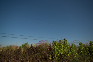 Namu Farm in the San Francisco Bay Area, California (photo: P.M. Lydon, Final Straw | cc by-sa)