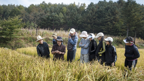 Rice harvest instruction at 최성현 Seonghyun Choi's natural farm in South Korea (photo: Patrick M. Lydon | Final Straw)