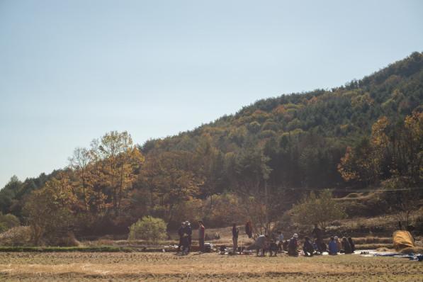 Community rice threshing day at a natural farm in South Korea (photo: Patrick Lydon / Final Straw)